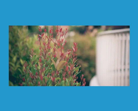 Jardinería. Desde cortar césped, eliminación de malas hierbas, siembra y mantenimiento de piscinas