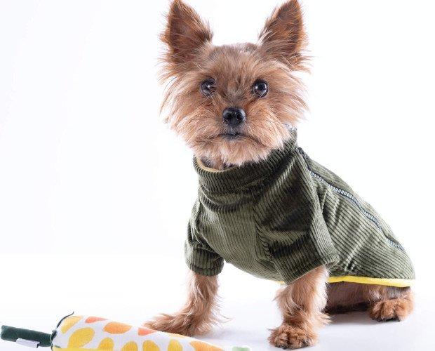 Abrigo Chiu EarlGrey. Abrigo para perro en tela de pana verde.Forro en muflón amarillo mostaza.