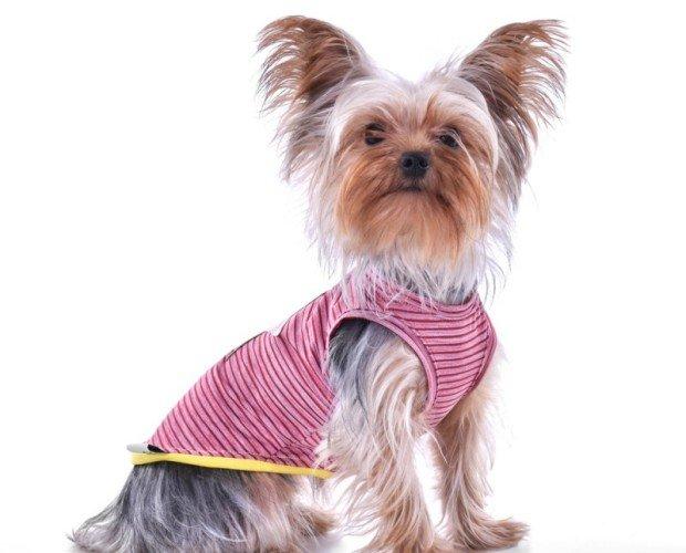 Camiseta Willy star marine. El top de la moda canina
