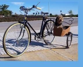 Bicicletas. Bicicletas clásicas en alquiler