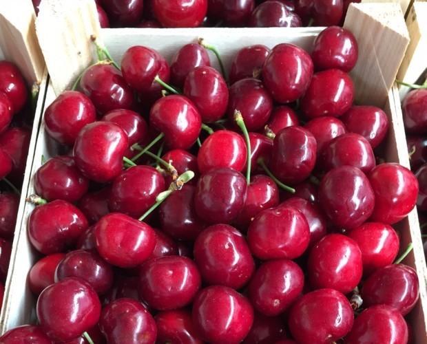 Cerezas.Deliciosas y frescas
