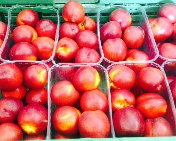 Nectarinas.Granel, 1 o 2 mantos, en cestas de 1kg o 500gr