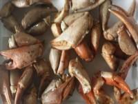 Proveedores Boca negra de cangrego
