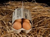 Huevos 100% ecológicos