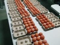 Empaquetado de huevos