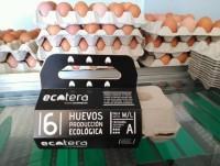 Huevos categoria A