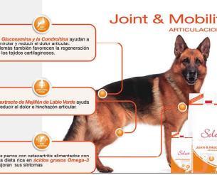 Alimento para las articulaciones. Nutrición y salud para mascota