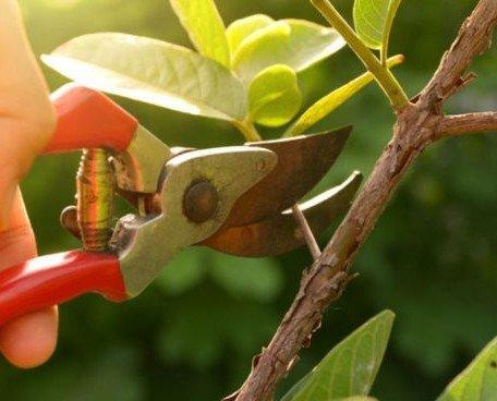 Jardinería. Poda, mantenimiento y diseño de jardines