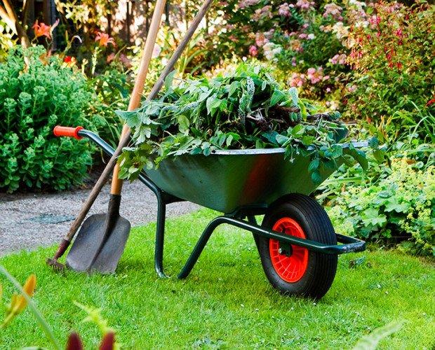 Jardinería. Ofrecemos servicios de jardinería
