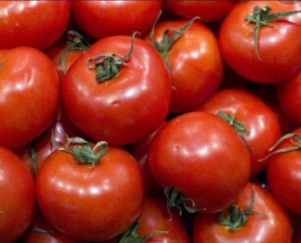 Tomates. Tomate fresco