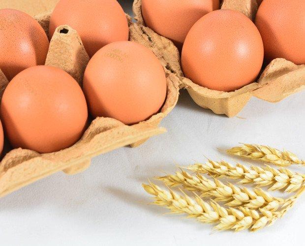 Huevos Nogales . Huevos Camperos Nogales