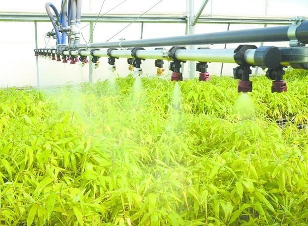 Materias Primas de Bambú.Especialistas en plantaciones de bambú