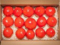 Tomates OX