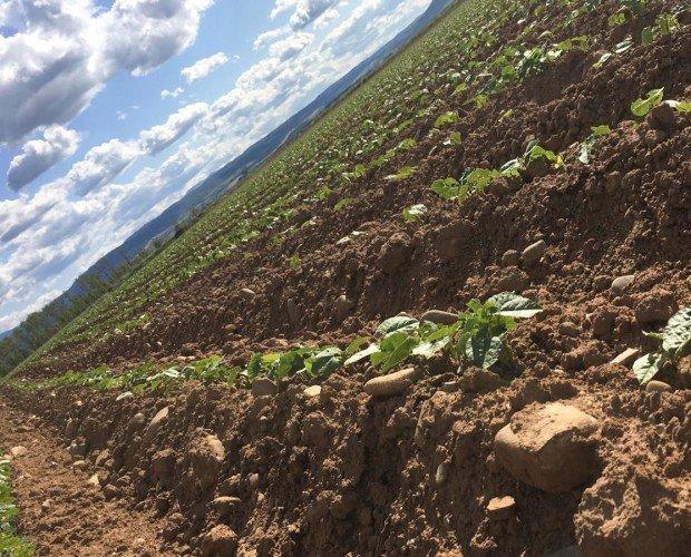 Campos. Nuestros campos de cultivo