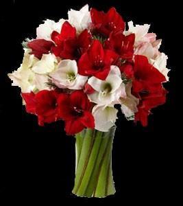 Flores.Ramo de Amaryllis