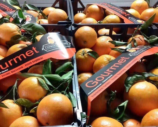Naranja plástico 14Kg. Muy dulces y jugosas