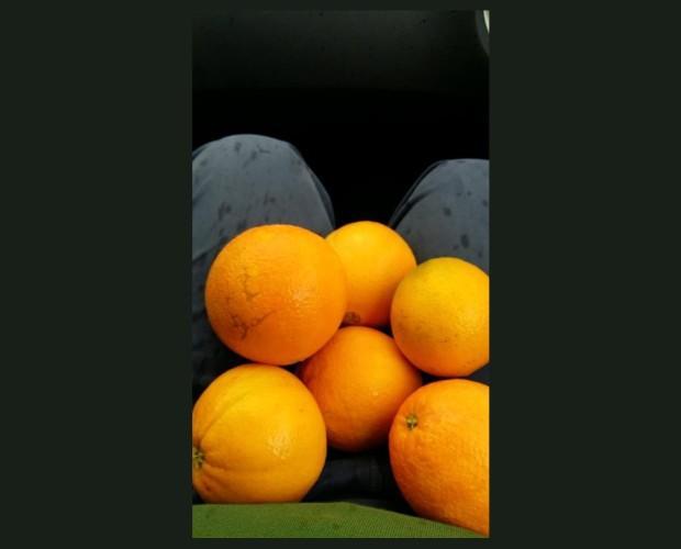 Naranjas de calidad