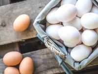 Variedad de huevos