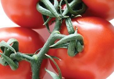 Vegetales. Tomates