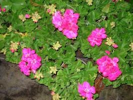 Distribuidores mayoristas flores for Distribuidores de plantas para viveros