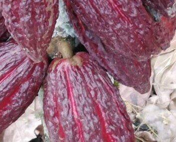 Cacao. Cacao en Grano. Este fabuloso cacao es de tipo CCN51 , ideal para la elaboración de chocolate y deriv