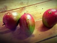 Mangos frescos