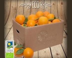 Naranjas Ecológicas. Las naranjas de mesa son de un tamaño medio-grande.