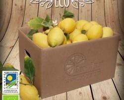 Limones Ecológicos. Es una variedad española, procede de la germinación de una semilla de Limón Común de la Vega