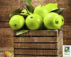 Limones Verdes Ecológicos. Ideales para repostería, adornar platos y preparar Gin Tonic.