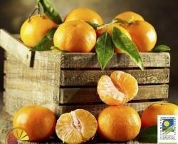 Frutas Ecológicas. Mandarinas Ecológicas. Sin tratamientos post-cosecha