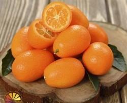 Kumquat. Destaca por su agradable sabor y por la particularidad de que incluso su piel es comestible.
