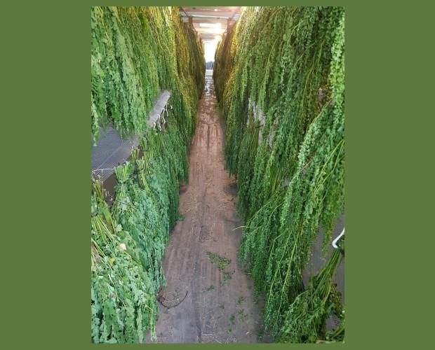 Nuestra planta. Planta con propiedades curativas