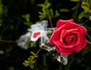 Flores Evento Recepción de invitados