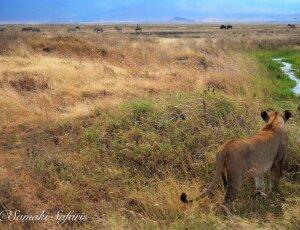 5% de descuento en viajes a Tanzania o Kenia